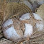 ¿Conocéis el trigo xeixa?